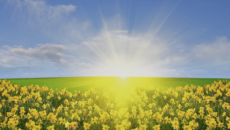 Daffodil Day 2019